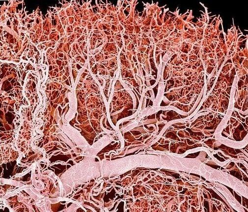 Lymph_capillaries